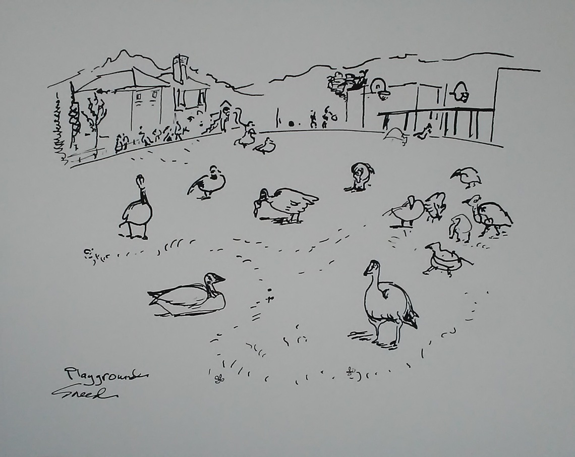 Playground.Canada Geese.20181017